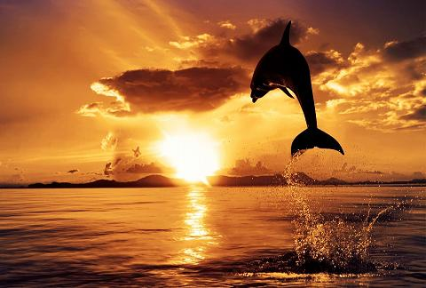 dolphin_at_sunset_1920x1080_81153